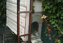 Urban Chickens / by Urban Gardens