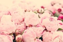 peonies... / i love them so much, i decided they needed their own board.  :o) / by Lee Hauser