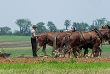 Amish Pictures / by Gwyn Warren