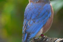 Birds / by Judi Lamb