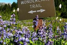 Wonderland Trail / by Barefoot Jake - Olympic Photography