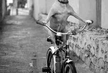 Bike love / by Rhonda Titus