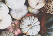 Pumpkin / by Louise