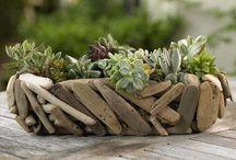 driftwood & beach stones / by Linda Soule