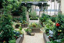 garden / by Rene Crowder