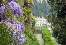 Italia Bella II / by Josie Goytisolo