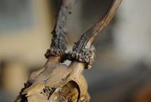 Animal skulls and skeletons / by Richard Disley