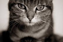 Animals / by Carolyn Weaver - Plexus Ambassador