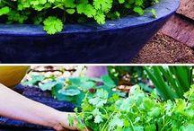 Backyard and Gardening / by Robin Lewitz