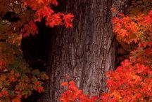 Those Treasured Trees / All kinds of trees!  I love trees! / by Leola Hays