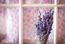 Love for lavender / by MariaJosee Funes-Paz
