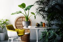 Indoor Plants / Wonderful and diverse plants that thrive indoors / by Henrika Arle