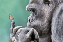 Animals / by Liz Veach