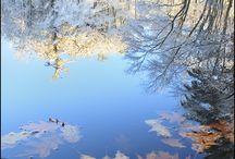 Nature / by Lorraine Somcher