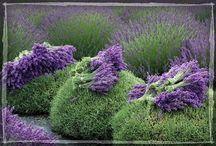 Plants, gardens & decor / by Fluttering thru Life