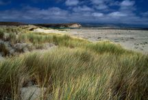 Beaches / by Point Reyes National Seashore Association