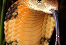 Venomous Serpents / by Todd Konitzer