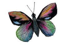 Butterflies / by Roxanne