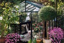 Greenhouses / by Lori Brock Designs