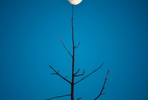 la bella luna / by Janice Swann