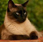 Pet Photography / Pet Photo's / by Vallie Duncan