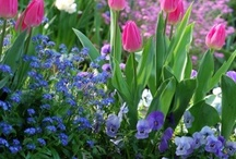 Yard/Garden / by Romy Morgan
