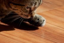 Cats / by Tim Wilcox