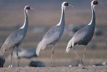Birds / by heather platt