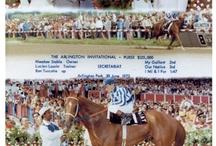 Horses / Famous race horses. / by Annie Sorenson