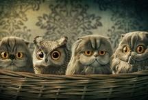 CATS / by JENNY ENVY