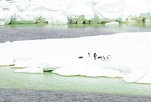 In Mawson's Footsteps / A photographic chronicle of ABC reporter Karen Barlow's Antarctic odyssey. / by ABC News
