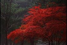 Nature / by Samar Babar