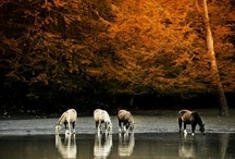 Horse's!! :-) / by ~Tracy