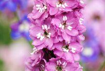 Gardening - Flowers / by Chip Beatty