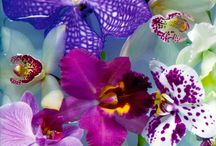 Petals ~ Jewel Tones / by Christine Kysely