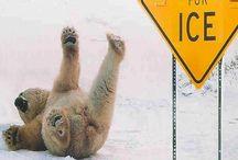 Polar Bears / by Kathy Budiac