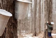 March is Maple Syrup Month in Minnesota / Maple Syruping Events Around the State / by FamilyFun TwinCites