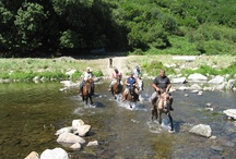 """Sardinia Horseback Vacations  Il Meglio della Sardegna (A Cavallo) / Need an Invite or would like to be added as a contributor? Follow our boards the more the merrier (or ALL) Don't forget to click on the FB Like button! Use the """"EDIT"""" button to add friends and colleagues you may think will love sharing  about Sardinia. Looking forward to seeing your pins, Here's to showing off the best of Sardegna Ajò! Use this link http://bit.ly/xperiensardinia and I will get back to you ASAP! Per un invito a collaborare con questo cartellone usate il link sopra scritto / by Experience Sardinia Italy Bella Sardegna"""