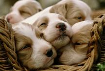 Dogs / by Kaye Rushing
