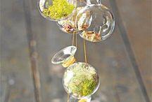 Terrariums / by Julie Herrin