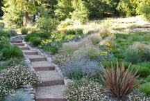 Landscaping ideas / by Debbie Minarik