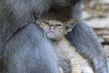 Amazing Life / by Tarryn Botes