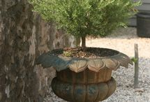 outdoor space / by Tanya Moreau