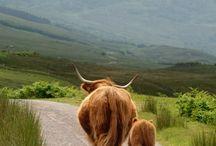 Just Highlands / by Freya Oliver