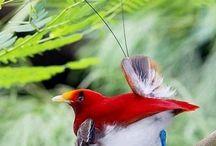 Birdies / by Brandon O'Meara