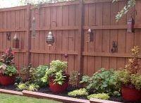 backyard / by Cecilia Popkowski Jones