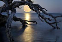 Moonlight / by Rusty