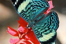 Bloemen & vlinders / by else waaksma