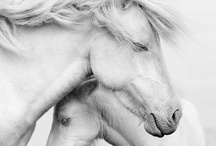 Animal world  / by Irina's CuteBox