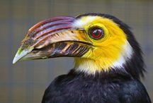 I LOVE BIRDS! / by Melissa Reed